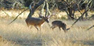 Deer Hunting - huntingmagazine.net