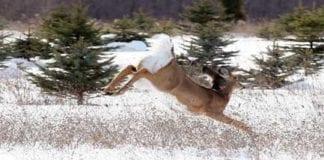 Winter Whitetail Deer - HuntingMagazine.net