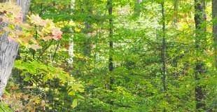Hunting Tips for Novice Hunters
