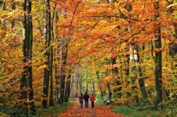 Family Walking Through Autumn Woods