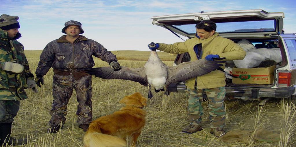 Mourning Dove Banding Program - California Department of ...