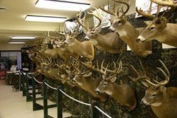 National Hunting and Fishing Days trophy bucks