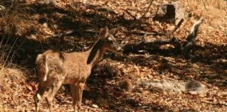 DNR staff tested deer from within and outside of the CWD-MZ in south central and southeastern Wisconsin.