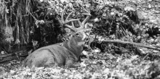 """""""Weather's always a fairly big determinant of deer harvest,"""" said Cynthia Osmundson, central region wildlife manager. """""""