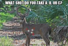 Shoot the deer
