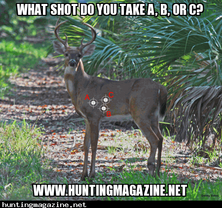What Shot placement do you take?