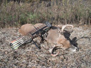A Successful Bow Killed Buck