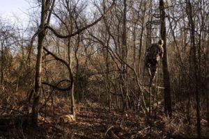 Bowhunter Making Use of  Ladderstand