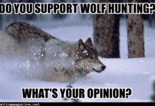 Do You Support Wolf Hunting?