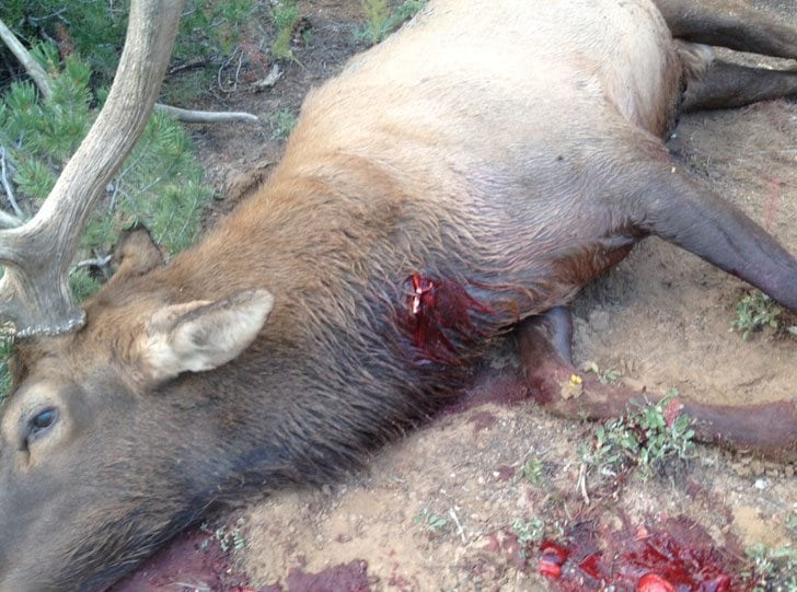 Shot Placement on Bull Elk