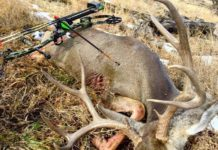 Shot Placement on White-tail Deer Buck