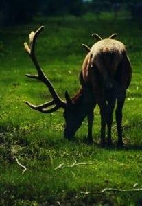 Elk P)hoto Bobby Badboy Hunting Magazine