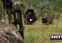 Turkey Hunting: Secret Decoy Tricks That Drive Gobblers Insane
