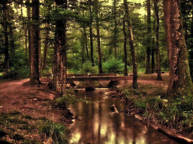 Deer Hunting Woods with Foot Bridge