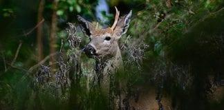 White-tail Buck_Dave Inman|Hunting Magazine
