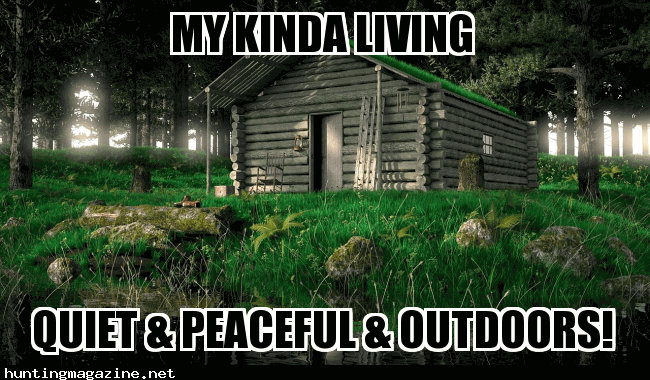 My Kinda Live - Cabin Life