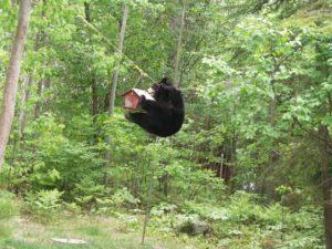 bear_birdfeeder_Park Ranger