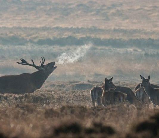 Oregon Elk Hunting