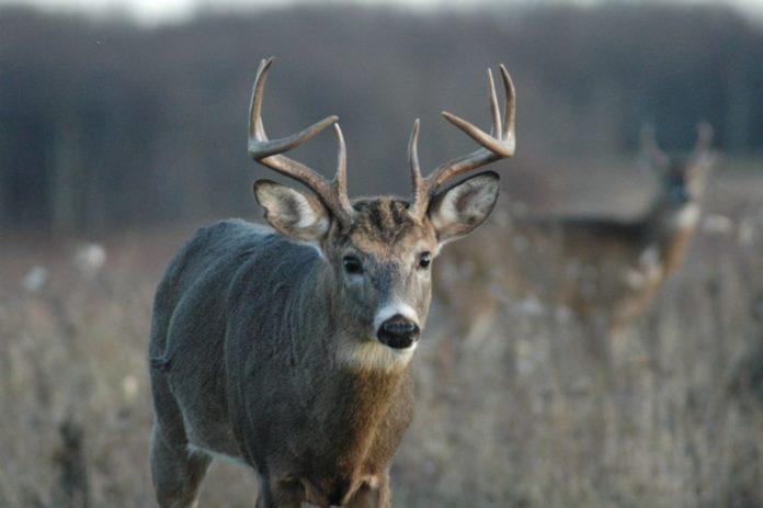 Wisconsin Deer Season 2016