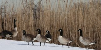 New waterfowl refuge to aid birds and hunters
