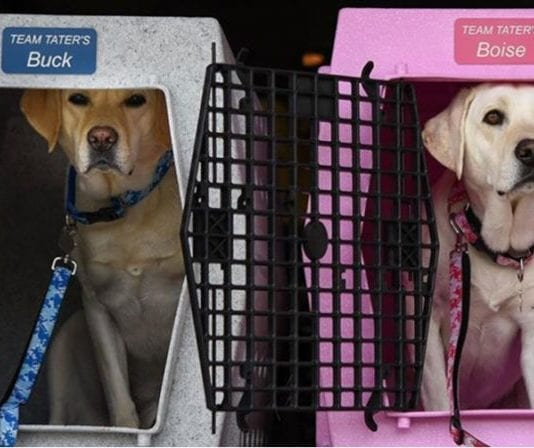 Tips for Transporting your Gun Dog