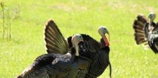 Oklahoma Turkey Hunting Season Photos by Chris Boswell
