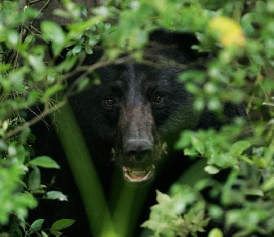 Camping Teenager Awakens to 'Crunching Sound' As Black Bear Bites into His Head