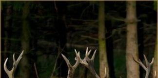 Deer Dance by Hunter Photographer Adam Simandel