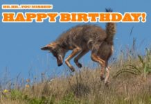 Varmint Hunting Meme: Happy Birthday from Hunting Magazine