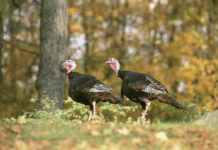 Why Buy A Turkey Blind for Hunting