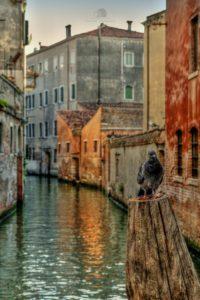 Parco Nazionale delle Dolomiti Bellunesi, Venezia