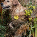 Duck Hunting Dog | Hunting Magazine
