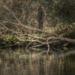 Duck Hunter | Hunting Magazine