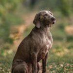 Hunting Dog | Hunting Magazine