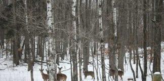 Whitetail Deer Hunting in Winter December Hunts
