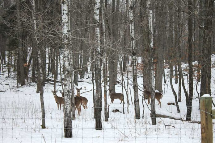 Whitetail Deer Hunting in Winter December Hunts