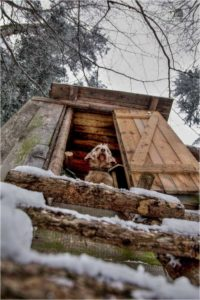 Basset Hound in Treestand