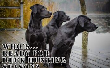 Whos ready for ducking hunting season hunting meme | Hunting Magazine