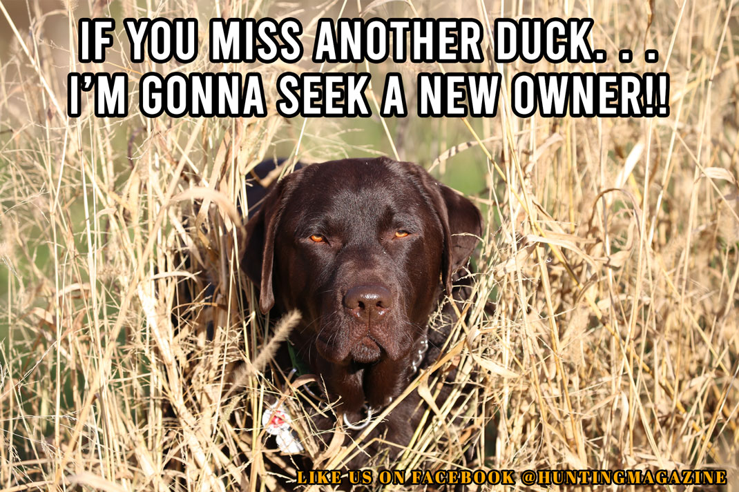 Duck Hunting Meme: If You Miss Another Duck. . .I'm Gonna Seek a New Owner!