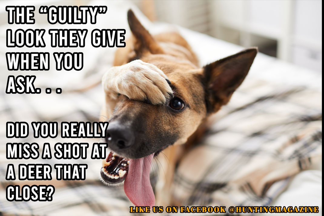 "Hunting Meme: The ""Guilty"" look they give when you ask. . . Did you really miss a shot at a deer that close? LOL"