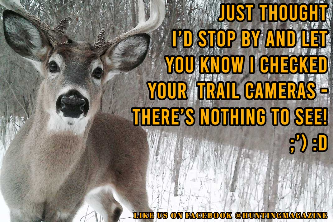 Hunting Meme: Whitetail Deer Buck Checks Deer Hunting Trail Cameras for Deer Hunter | Hunting Magazine