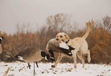 Family Goose Hunt in Northern Wisconsin