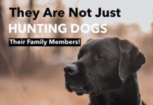 Hunting Meme: They Are Not Just Hunting Dogs - Their Family Members   Hunting Magazine