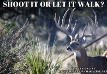 Hunting Meme: Shoot it or Let it Walk | Hunting Magazine